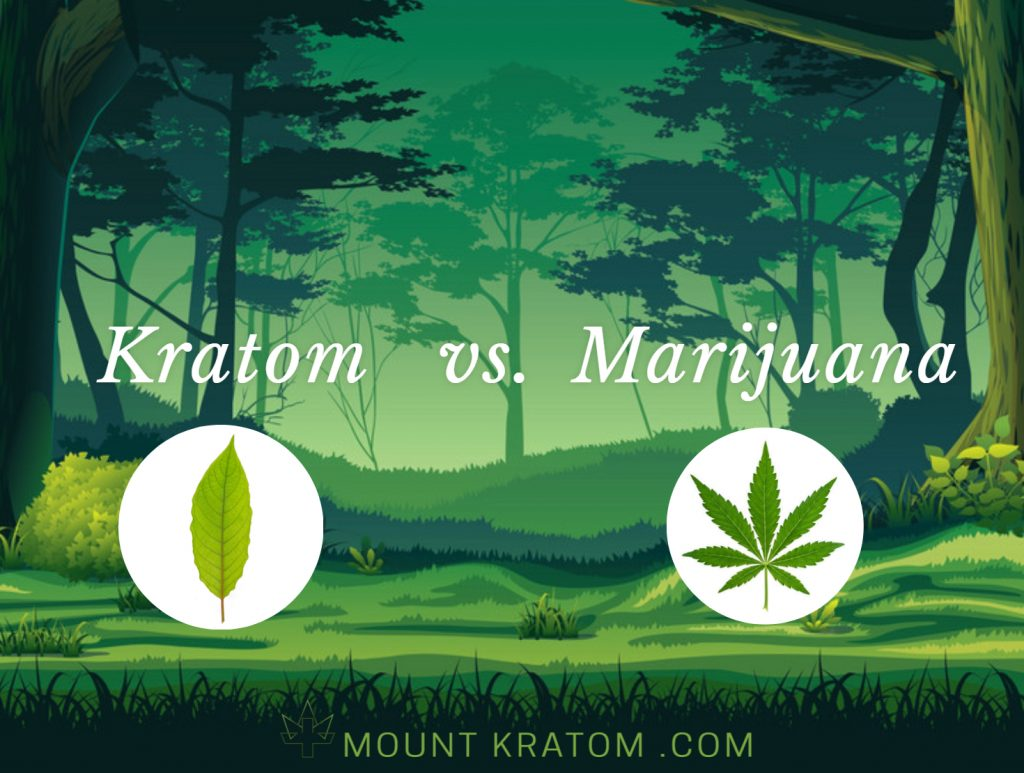 Article comparing kratom with marijuana. Effects, Uses and Benefits